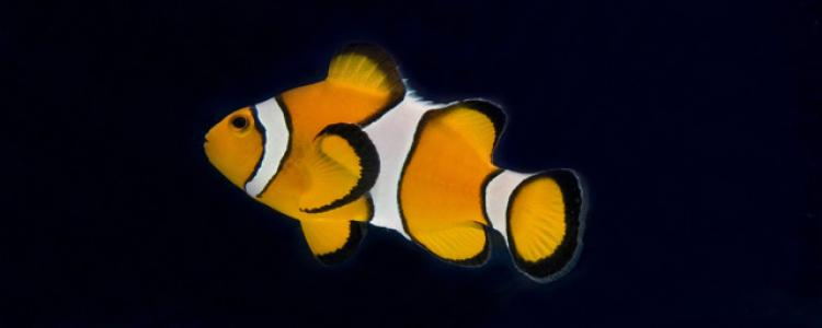 Importing Ornamental Fish image